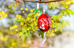 Grean Easter background with wooden eggs on the tree Stock Image