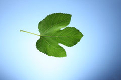 Grean leaf Royalty Free Stock Images