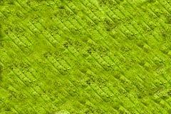 Grean leaf background Stock Image