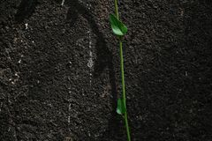 Grean leafy branch falling on to ground over a black textured wall royalty free stock photos