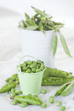 Grean pea in the buckets. Green pea and pea pods in small buckets. High key Royalty Free Stock Photo