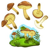 Greasers mushroom isolated, vector illustration Stock Image
