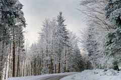 Greasy winter road in beautiful forest Royalty Free Stock Image