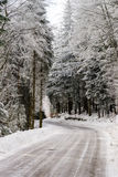 Greasy winter road in beautiful forest Stock Image