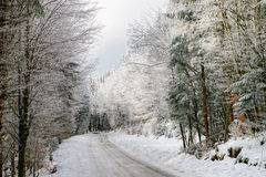 Greasy winter road in beautiful forest Stock Photos