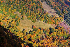 Great aerial view of a forest on a sunny autumn day Stock Images