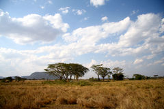 Great Africa savanna landscape. With cloud royalty free stock photography
