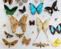 Amazing closeup view of many various colorful butterflies on light grayish background stock images