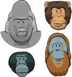 Great Ape Faces. A set of cartoon faces of the Great Apes: Gorilla, Chimpanzee, Orangutan and Bonobo Royalty Free Stock Image