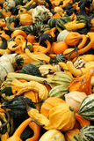 Great assortment of squashs and gourds. A nice assortment of fresh yellow, orange and green gourds Royalty Free Stock Images