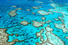Great Barrier Reef Lizenzfreie Stockbilder