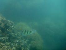 Great Barrier Reef. In Australia Stock Photo