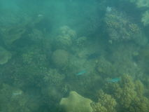 Great Barrier Reef. In Australia Royalty Free Stock Photos