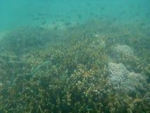 Great Barrier Reef. In Australia Stock Image