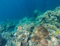 The Great Barrier Reef, Australia Royalty Free Stock Image