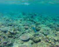 Great barrier reef Australia Royalty Free Stock Photos