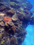 Great Barrier Reef. Coral and fish on the Great Barrier Reef, Australia Royalty Free Stock Photos