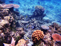 Great Barrier Reef Royalty Free Stock Photography