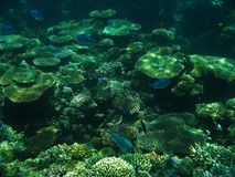 The Great Barrier Reef. Fish on the Great Barrier Reef, Australia Stock Image