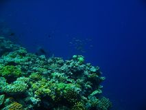The Great Barrier Reef. Fish on the Great Barrier Reef, Australia Stock Photo