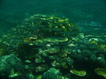 The Great Barrier Reef. Fish on the Great Barrier Reef, Australia Royalty Free Stock Photo