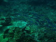 The Great Barrier Reef. Fish on the Great Barrier Reef, Australia Stock Images