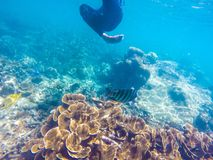 Great Barrier Reef. Fish australia Royalty Free Stock Images