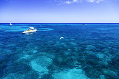 The Great Barrier Reef in Queensland State, Australia Royalty Free Stock Photos