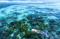 The Great Barrier Reef in Queensland State, Australia Royalty Free Stock Images