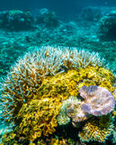 Great Barrier Reef Sporttauchen lizenzfreie stockbilder