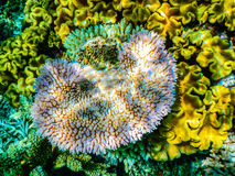 Great Barrier Reef Sporttauchen stockfotografie