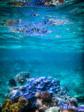 Great Barrier Reef Sporttauchen Stockbilder