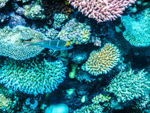 Great Barrier Reef Sporttauchen Lizenzfreies Stockfoto