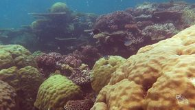 Great barrier reef-2 stock footage
