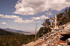 Great Basin National Park. View of Great Basin National Park with an ancient Bristlecone Pine in the Foreground stock image