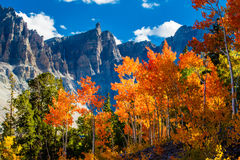 Great Basin National Park Royalty Free Stock Images