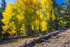 Great Basin National Park Royalty Free Stock Image