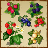 Great berry set, mix of six types of berries Stock Images