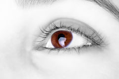 Great big  brown eye. Of a women Stock Images