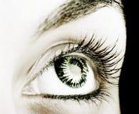 Great big eye. Stock Image