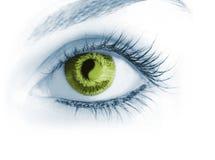 Great big eye. Royalty Free Stock Image