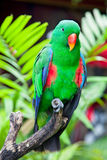 Great-billed Parrot  in nature surrounding Stock Photos