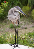 Great blue heron on a background of  grass Stock Images