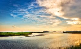 Great Blue Heron enjoying a golden Chesapeake Bay sunset. Great Blue Heron standing on a small island watching a beautiful Chesapeake Bay sunset in Maryland Royalty Free Stock Images