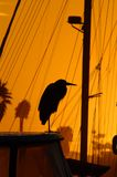 Great Blue Heron Perching on dock at sunrise Ventura, CA., harbor stock images