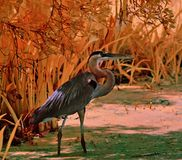 Great blue heron photographed in infrared Stock Photo