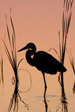 Great Blue Heron Silhouette at Sunrise Stock Photo