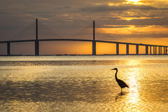 Great Blue Heron silhouetted at sunrise - St. Petersburg, Florid Stock Image