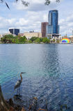 Great Blue Heron, skyscrapers and Amphitheater, at Lake Eola,. Great Blue Heron, skyscrapers and Amphitheater, at Lake Eola in downtown Orland, April 26, 2017 Stock Images
