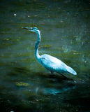 Great Blue Heron at Swan Lake and Iris Gardens. Sumter, SC Stock Photography